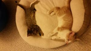 Aria & Queso loving their new cat bed