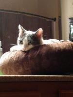 Selena, contemplating a snooze in sun