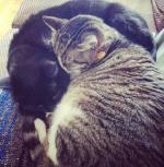 Squid-Bear kitty cuddles