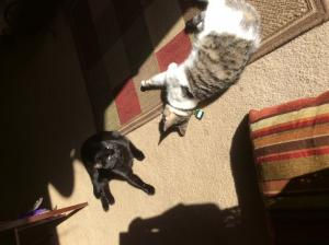 Dolly and her big brother Oliver sunbathing together.