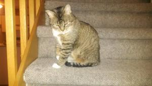 Cindy wonders how comfortable a nap on the stairs would be.