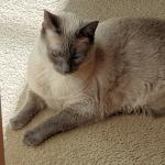 Deja Bleu relaxes on the matching carpet at his fur-ever home.