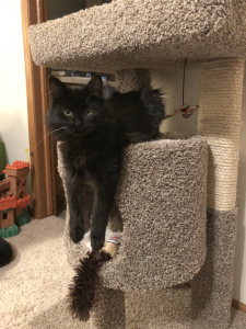 Luna is now in charge of the cat tree. Do you have an appointment?
