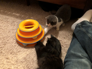 Daisy (grey & white) and Luna (black) will get those balls out one day!
