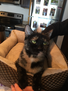 Squeeks looks lovingly at her new human, thanking him for the comfy bed and great fur-ever home.
