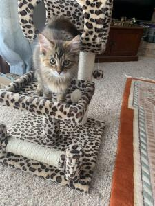 Mimi is living in style with her paw-some cat-print cat tree.