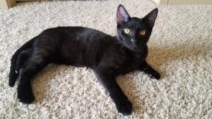 Oli can't believe how great his new fur-ever home is! And how great he looks against this carpet!