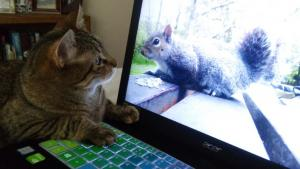 """""""How did that squirrel get inside that glow-y box?"""""""
