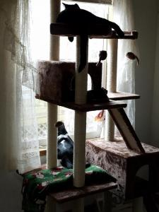 Black Jack (top) and Brady (bottom) keep a careful watch on the neighborhood from their cat tree.
