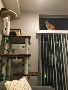 Alchemy surveys his kingdom from high atop the window.