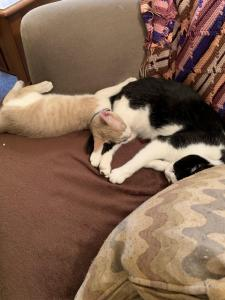 Gouda (cream and white) hangs out with his brother, Samurai Jack, another Angel's Wish alum.