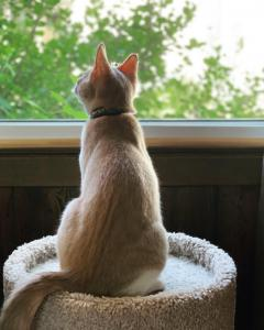 """Gouda experiences his first open window at home: """"You mean I can smell outside without BEING outside?!"""""""