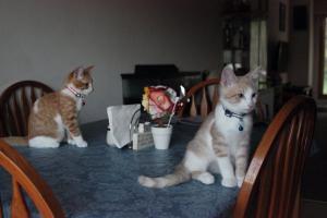 Rocket & Pumpkin are ready for dinner!