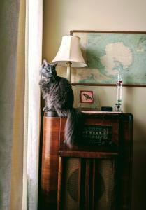 Shadow keeps watch over the inside and outside from her fancy perch.