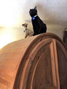 Trinity and Neo take their  bug patrol duty very seriously.
