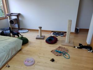 Felix and Lola hang out in their room, trying to decide what to play with first!