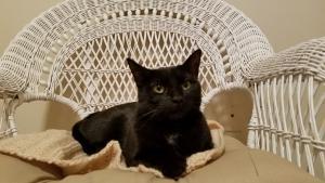 Stitch claims her throne!