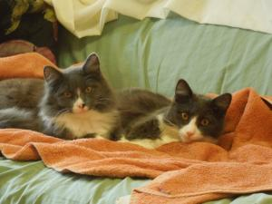 Saturn and Jupiter enjoying their first morning at their new forever home.
