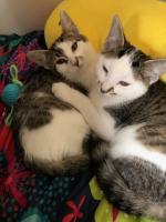 A moment of kitten cuteness between siblings Mars & Jupiter.