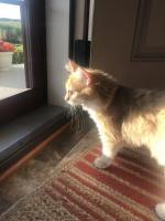 Peyton gets herself acquainted with her new neighborhood.