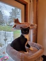 Oswald (tuxedo) knows the top tier of the cat tree always goes to the oldest cat...at least that's what Wesley (orange) told him.