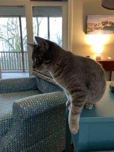 Finn explores the different jumping and perching sites in his new home.