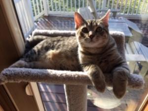 Zoey (or Cali?) feels right at home in her new cat tree.