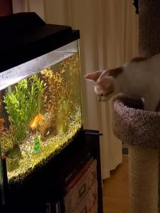 Just a little fish watching!