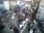 A portion of the cat colony that are relying on our help!