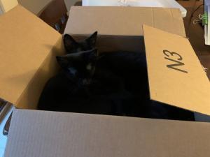 A cat sister too!
