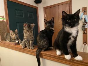 Kipp Kittens